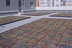 設備設計 屋上緑化